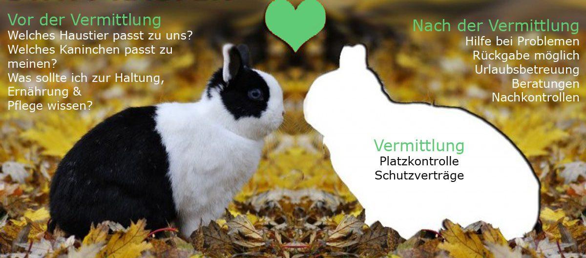 Kaninchen-Adoption